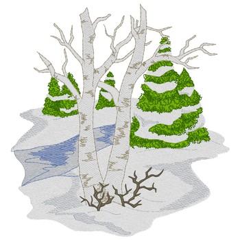 Birch & Evergreen Trees