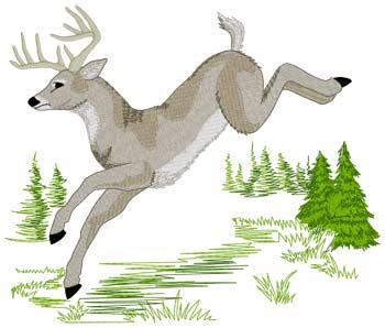 Jumping White Tail Buck